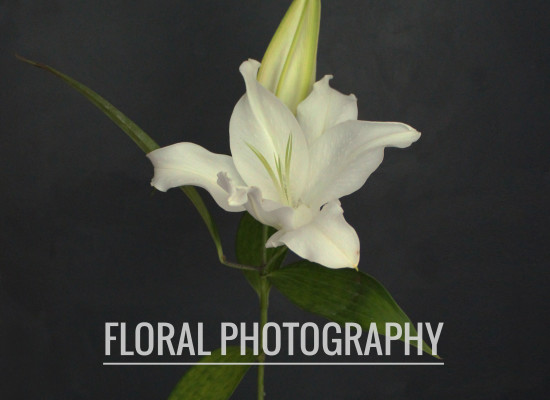 Floral Photography Series